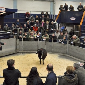 Show Supreme Champion Enters the Ring