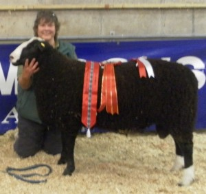 Judy Maxwell's Chark Tiger champ at Moira Zwartbles Breeders' Show and Sale