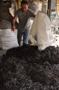 Dried Zwartbles Wool Piled & Readying for Teasing