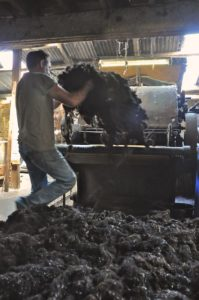 Loading Zwartbles Wool Onto Teasing Machine