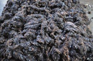 Zwartbles Wool Just Before Teasing