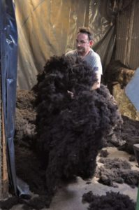 Collecting up Teased Wool