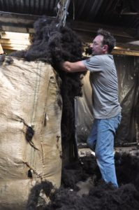 Stuffing Freshly Teased Wool into Wool Sack