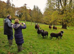Noleen & Colin Henry Judging My Flock