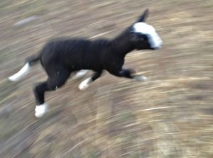 He is trotting happily off to his Maaa.