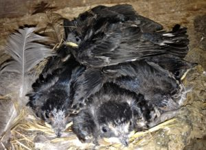 This Nest of 4 Now Becomes 5