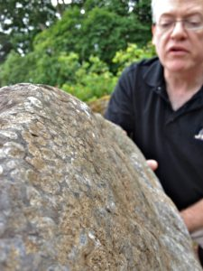 Fossilised Coral Round Tops
