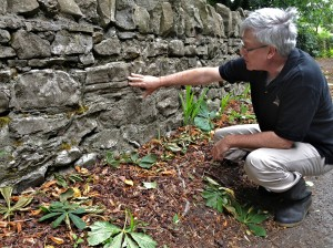 Discovering Preserved Bedding in a Block of Limestone