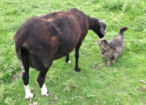 A Pause for Conversation Between a Ewe & Mr.B