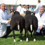RUAS 2013 Res Champions Interbreed Pairs Cyril Cromie and Colin Thorburn.