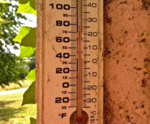 Nearly 80f (26c) in the shade today!!! Hot Hot Hot for a Woolly Cat Shepherd