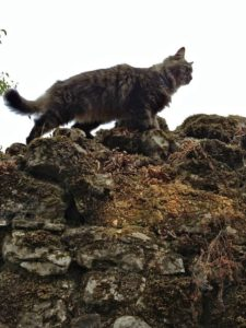 The Cat Shepherd Hears His Lost Sheep