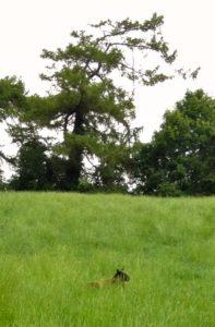 Hidden in the Long Grass