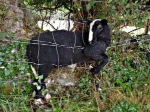 Stuck Between a Fence & a Wall