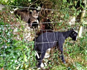 The Cat Shepherd Inspecting the Problem