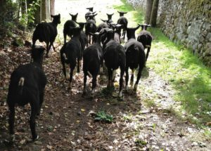 Trotting Down the Lane Way to Pastures New