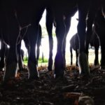 A Sapling Forest of Lambs Legs Sheltered from the Rain