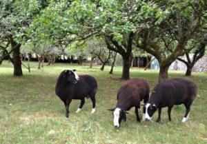 Munching Green Wind Fallen Apples