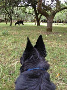 The Big Fellow Watching The Welchman Munching Apples