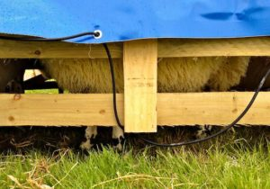 Extreme Sheep Rain Protection