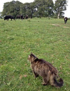Mr.B Counting Sheep