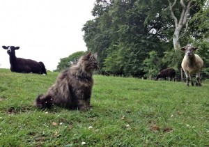 Bodacious Pauses for a Thought Amongst the Sheep
