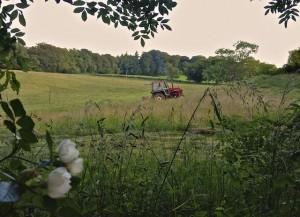 Neighbor Mowing Hay