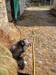 Pepper My Hose Guarding Assistant