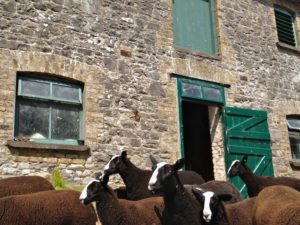 Flocking Past the Stables