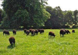 Fresh Grass Heads Down