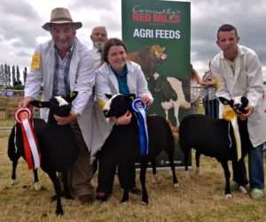 1st, 2nd, 3rd for the O'Keeffe's ZSA Flock #00554 Limestone