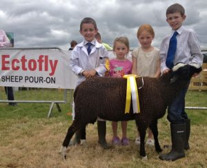 Breda Horgan's Third Placed Ram Lamb