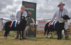 "Noel Lally Reserved Champion Ewe & Jim O'Keeffe""s Champion Ram"