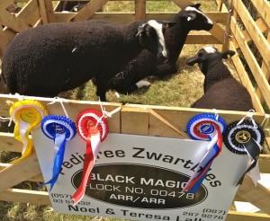 Noel & Teresa Lally's Prize Winning Pen of Ewes
