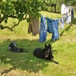 Laundry in the Sun; Dogs in the Shade