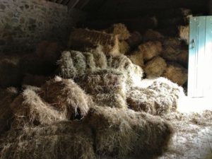 A Mess of Hay Bales