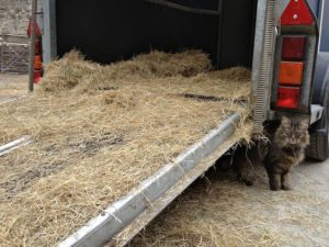 Mr. B Turns Up When Last Bale Stored