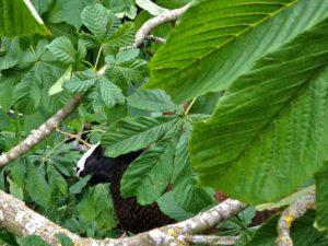Tender Leaves Munched