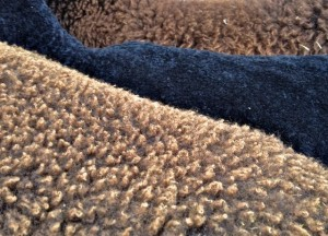 Zwartbles Shorn & Unshorn Fleece Colors