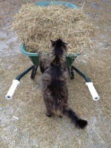 Yes Even Tried To Push Wheelbarrow
