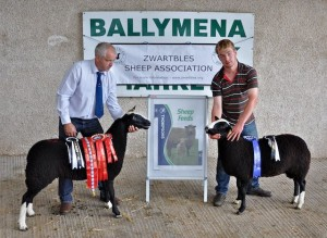 Overall Show & Sale Champion Ewe Lamb Glencoy 00280-0016A & Reserved Champion Ram Lamb Beechbrook Archie 00681-006A