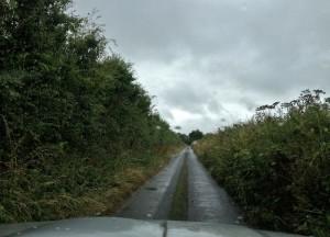 A County Louth Boreen
