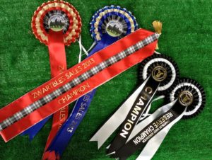 Championship Ribbons