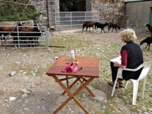 Rosamond Sketching the Loose Sheep