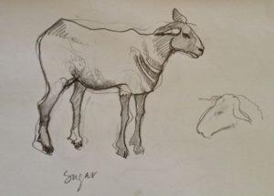 Rosamond Casey's Sketch of Sugar