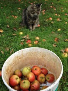Do I have to Help Pick Up Apples