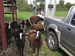 Can We Help Load Our Wool?