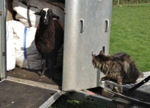 """""""WHAT? I Give the Order Around Here!!"""" so said the Cat Shepherd"""