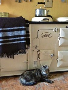 Our most famous resident is Mr.B aka Bodacious aka #catshepherd Here this chilly morning getting warmed by the Aga