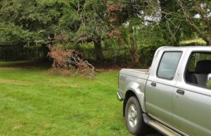Good old truck pulls branch down